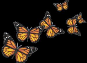 Orange butterfly for healing